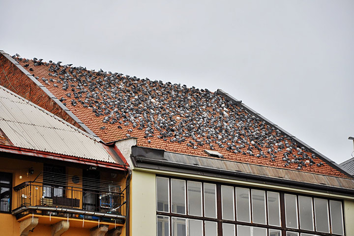 A2B Pest Control are able to install spikes to deter birds from roofs in Willesden.