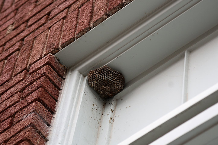 We provide a wasp nest removal service for domestic and commercial properties in Willesden.